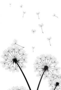bitcoin dandelion protocol